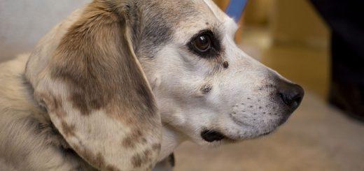 Ismerjük fel időben a rákot a kutyánknál!